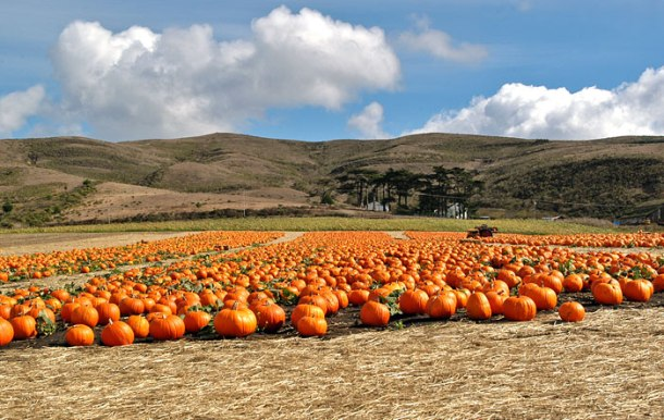half_moon_bay_pumpkin_harvest_700
